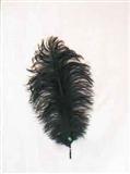 Veer Klein 40cm Zwart