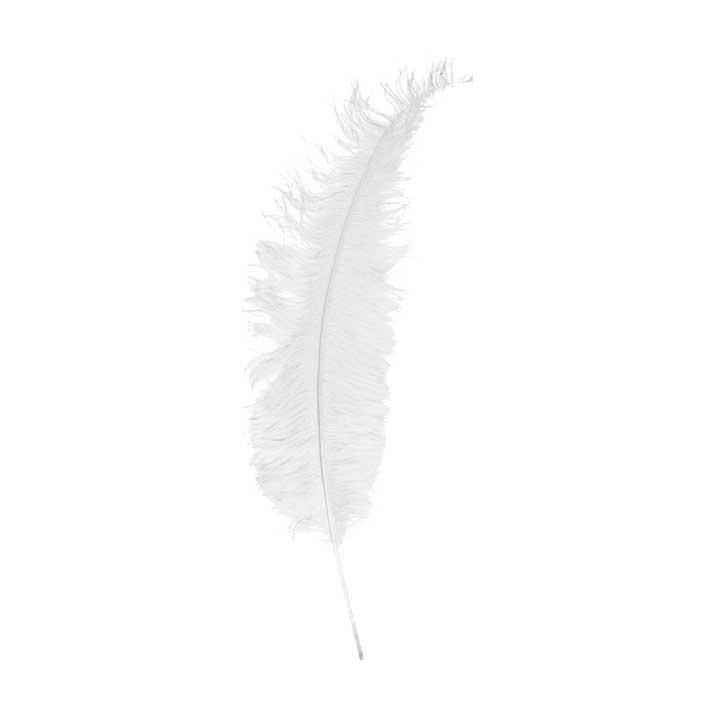 Struisveer Groot Spadona Wit 50-60cm
